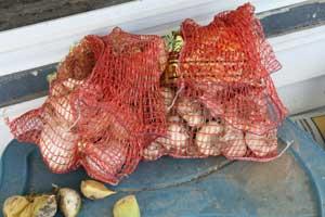 Bagged garlic