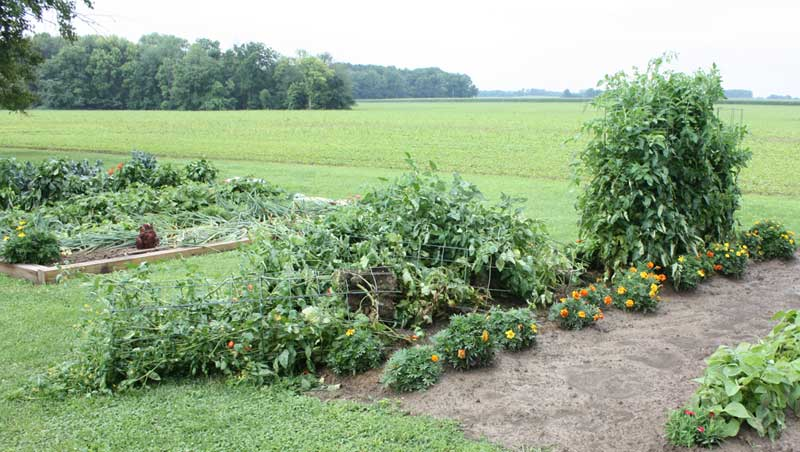 Tomato cages down