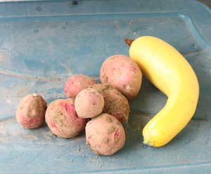 Potatoes and yellow squash
