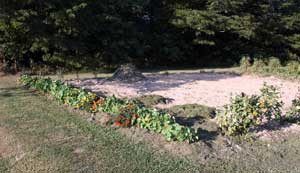 Renovated corn patch