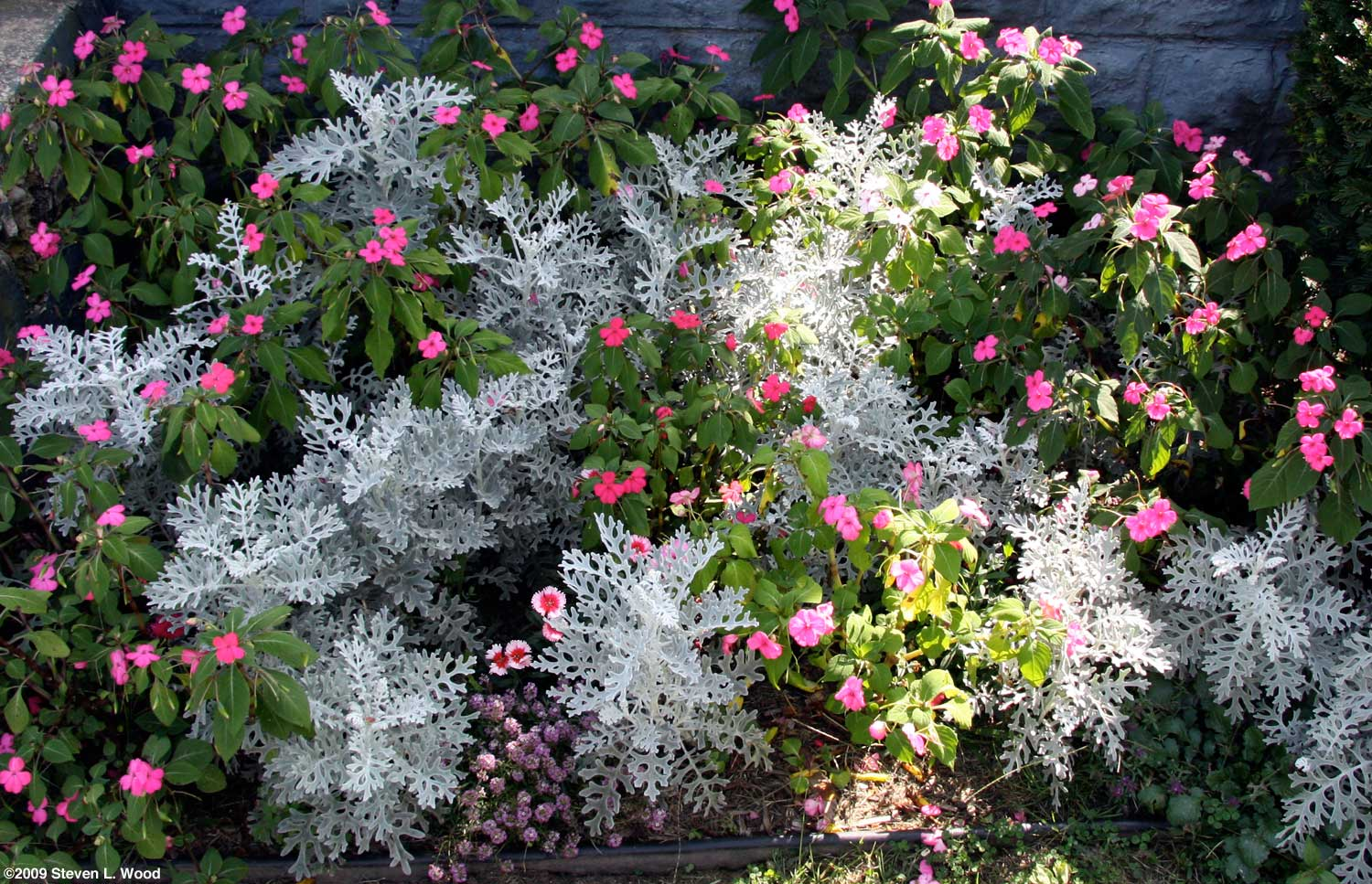 Plants for a north facing garden - Front Flowerbed