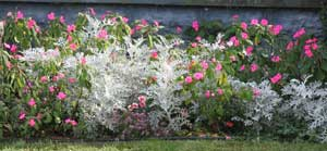 Flower bed in September