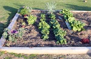 Lettuce, spinach, etc.