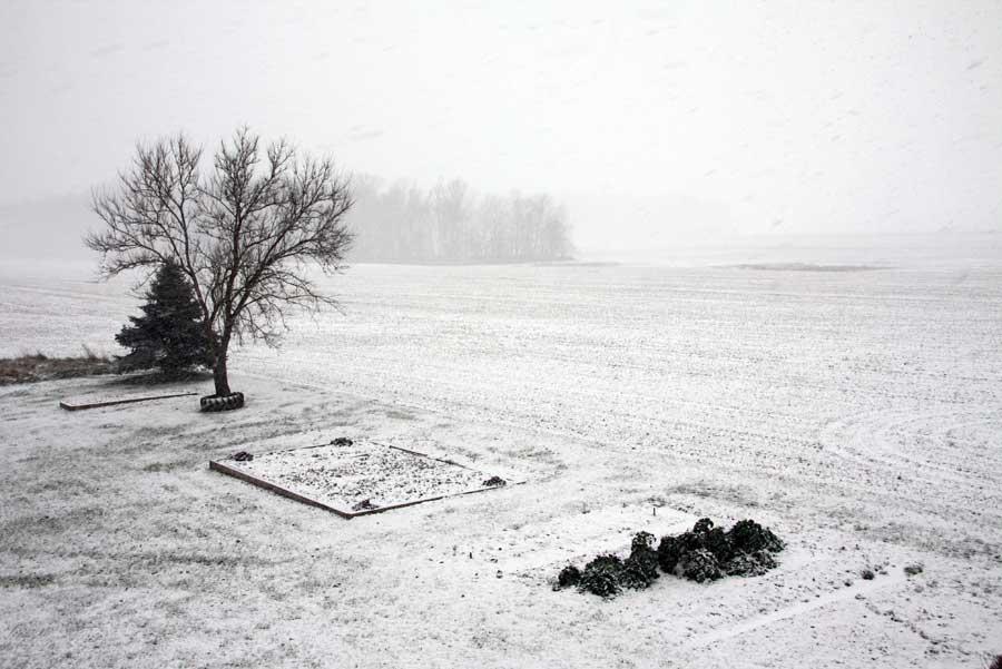 The Senior Garden - December 27, 2009
