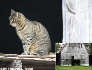 Theo in barn