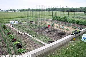 Pepper & tomato cages