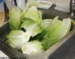 Lettuce draining