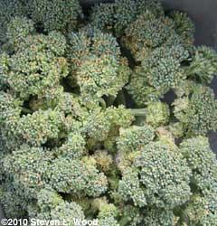 Overripe broccoli