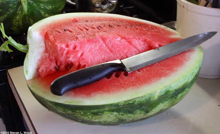 First watermelon of the season