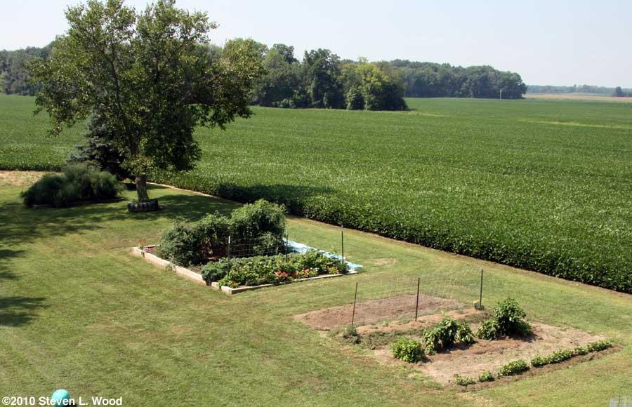 Our senior garden - 7/31/2010