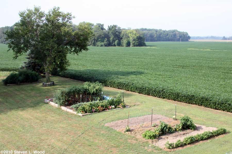 Our senior garden - 8/9/2010