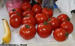 Moira tomatoes