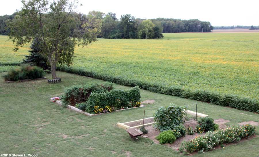 Our senior garden - 9/14/2010