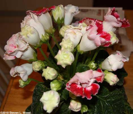 Lotsa blooms