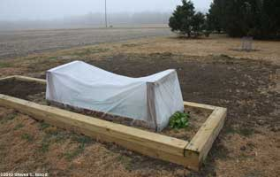 Lettuce under cold frame
