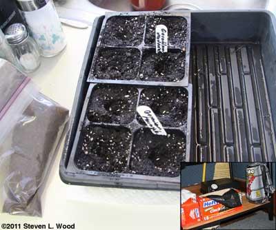 Starting geranium seed