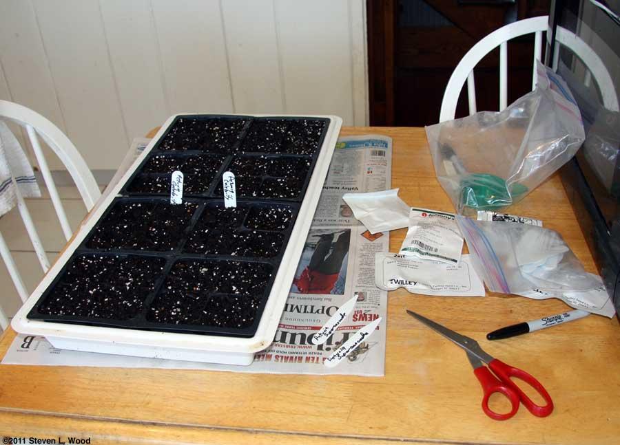 Seeding petunias