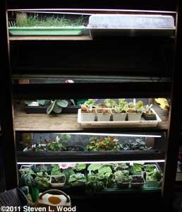 Plants under fluorescents