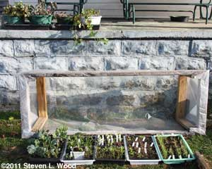 Cold frame in mid-March
