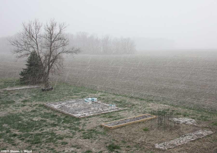 Our senior garden - 3/30/2011
