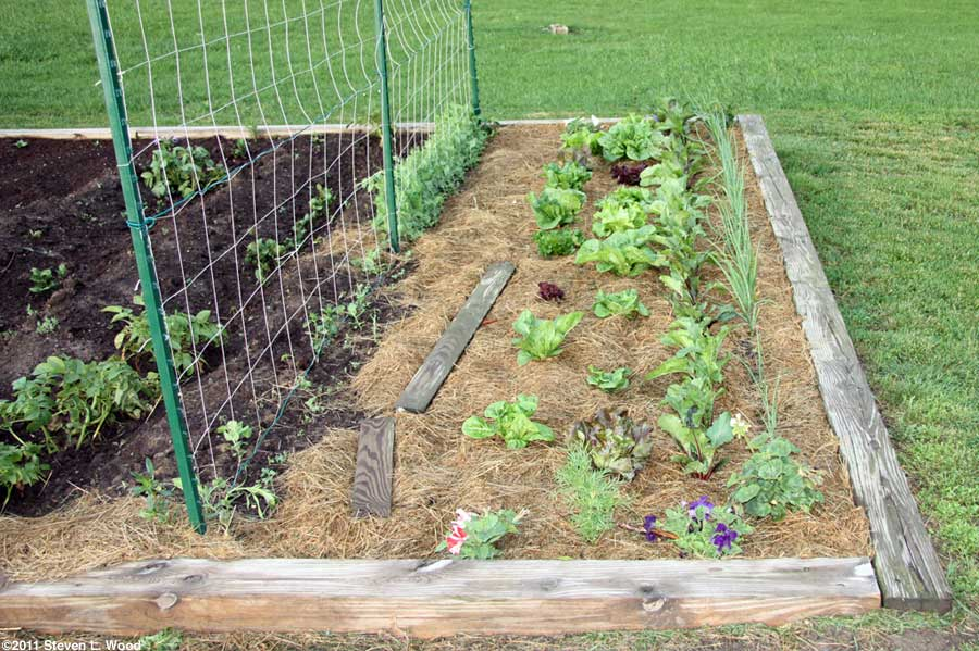 Potatoes, peas, lettuce, beets, onions