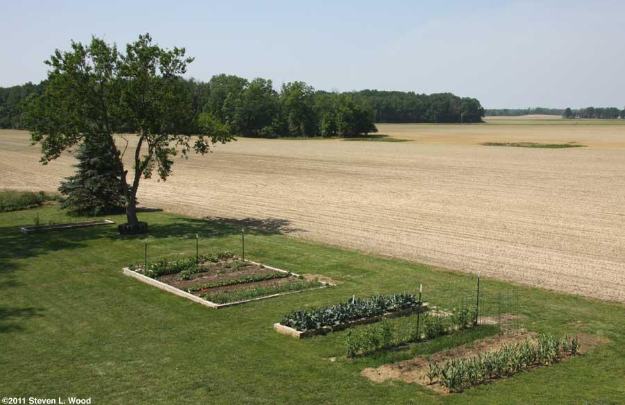 Our senior garden - 5/31/2011