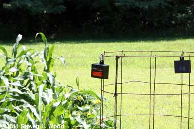 Nite Guard on tomato cage