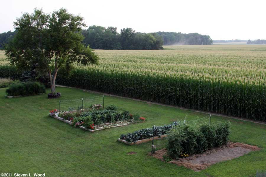 Our senior garden - 7/18/2011