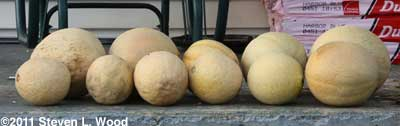 Lots of melons