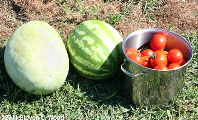 Watermelons and tomatoes
