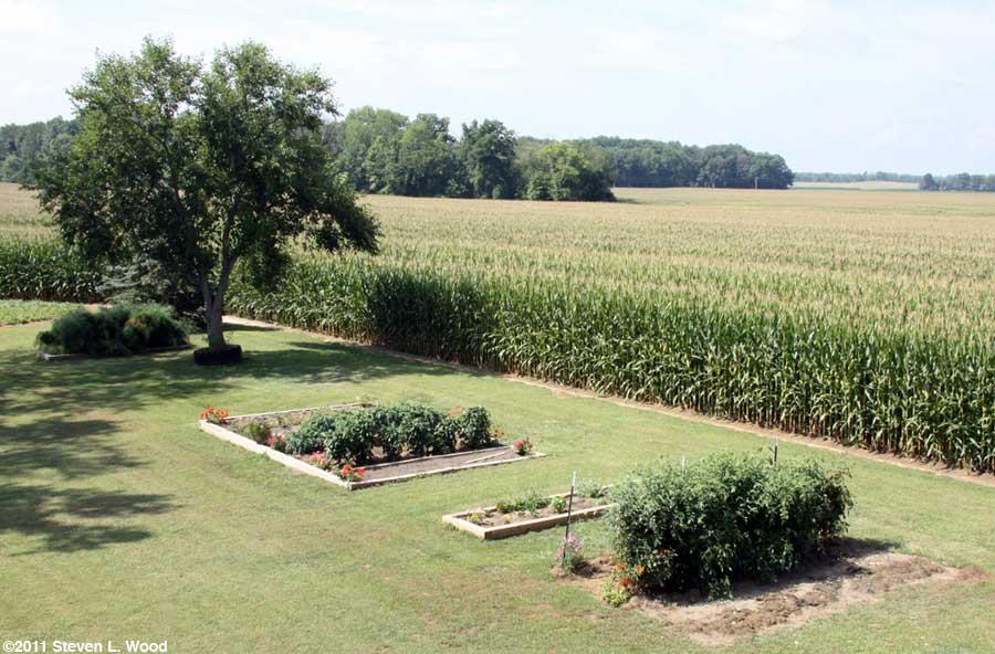 Our senior garden - 8/9/2011