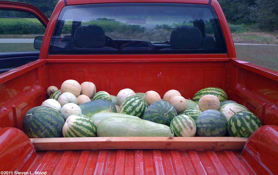 Melons on truck