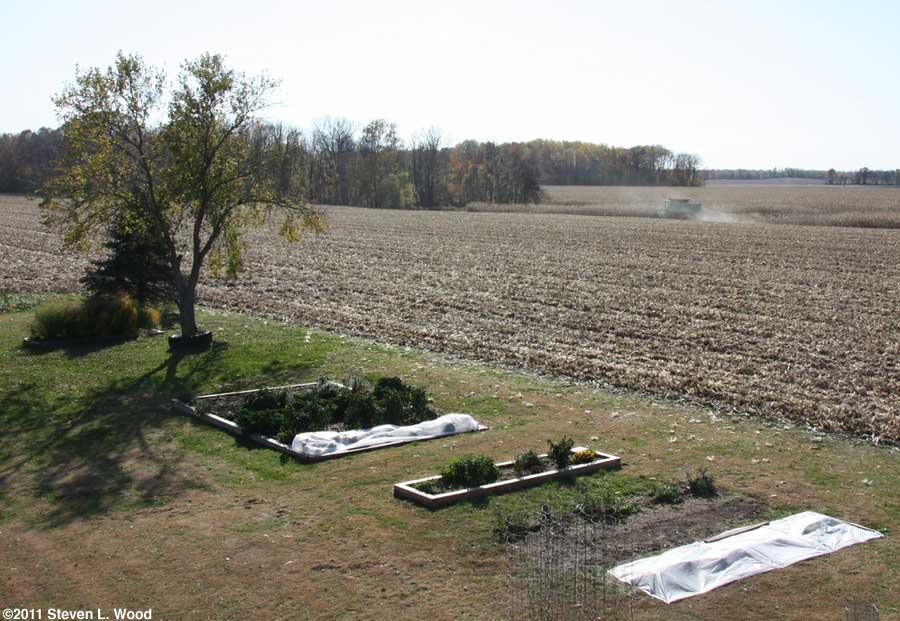 Our senior garden - 10/31/2011