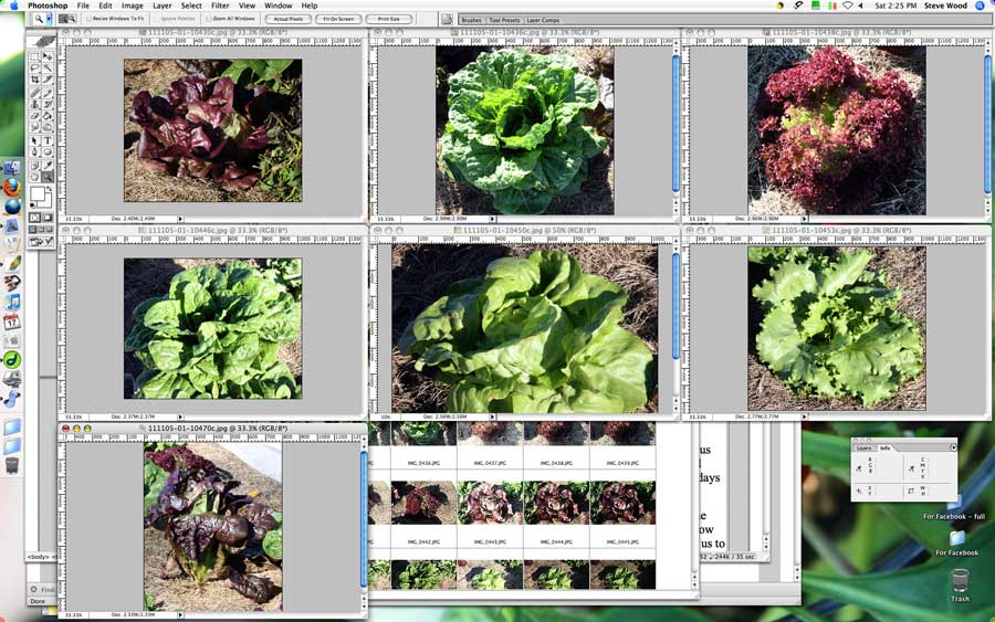 Lettuce in Photoshop