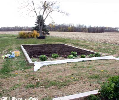 Tilled main bed