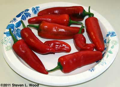 Paprika Supreme peppers