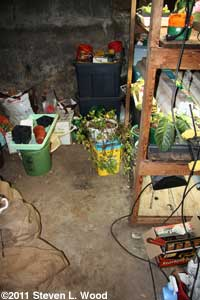 Basement plant area