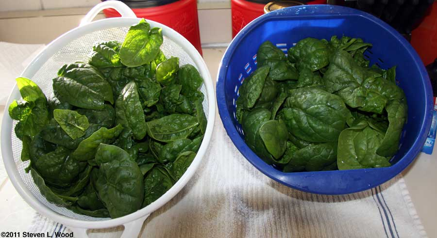 Spinach drying
