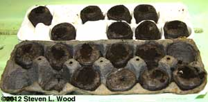 Peat pellets and egg cartons