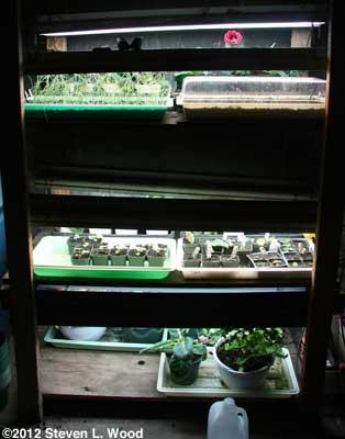 Onions on plant rack