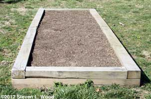 Asparagus raised bed