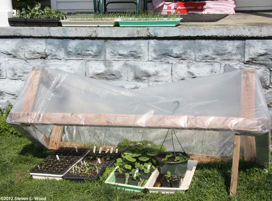 Plants on porch and under cold frame