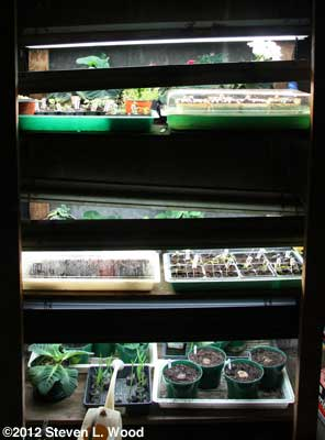 Busy plant rack