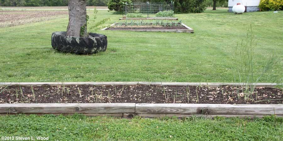 Main garden beds