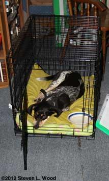 Petra in crate