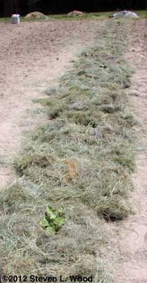 Mulched row
