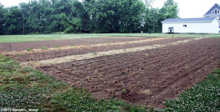East Garden - May 31, 2012