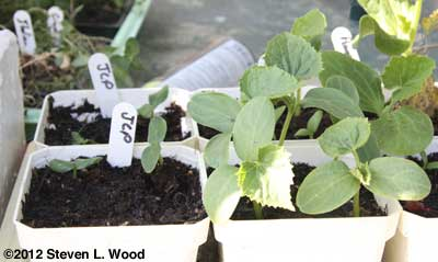 JLP seedlings