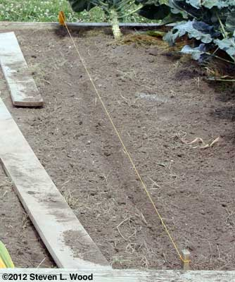 Kale row dibble