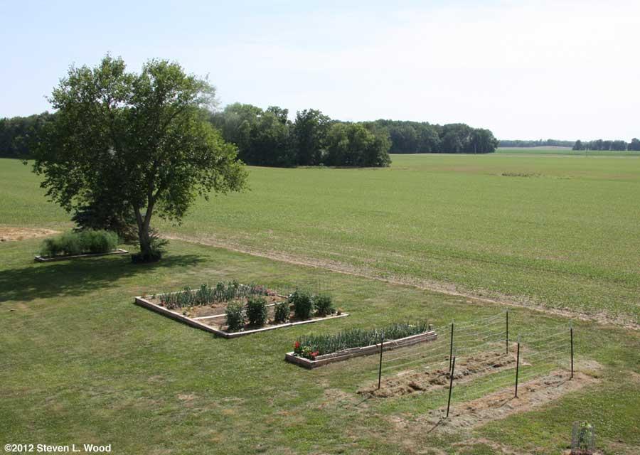 Our senior garden - 6/15/2012